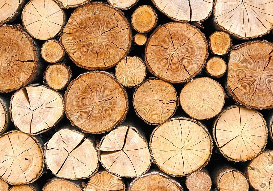charaktervolles Kernholz