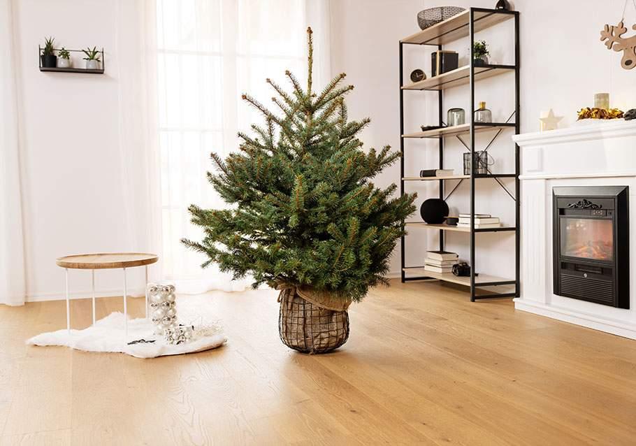 Wimmer Wohnkollektionen: Den Baum langsam an das Klima im Wohnraum gewöhnen.