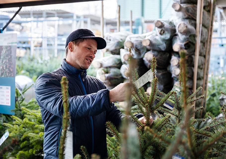 Wimmer Wohnkollektionen: Weihnachtsbaum im Topf - was muss ich beim Kauf beachten?