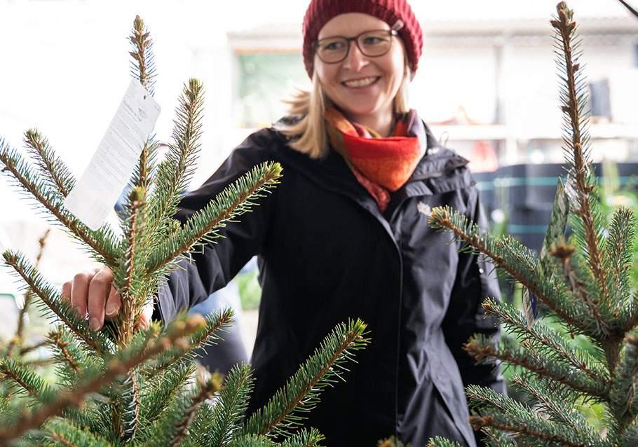Wimmer Wohnkollektionen: Wir geben Einkaufstipps zum Weihnachtsbaum im Topf.