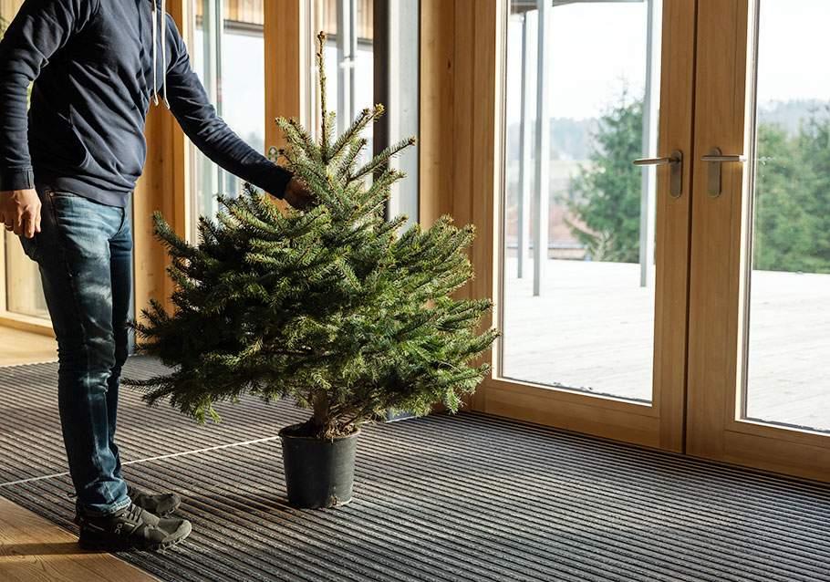 Wimmer Wohnkollektionen: Den Baum im Topf langsam aklimatisieren.